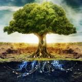sols-biodiversité